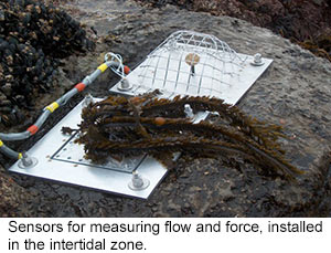 sensors that measure flow and force