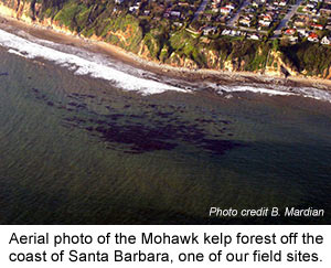 mohawk kelp forest aerial
