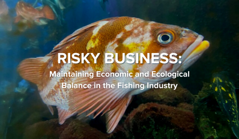 Risky Business: Maintaining Economic and Ecological Balance in the Fishing Industry
