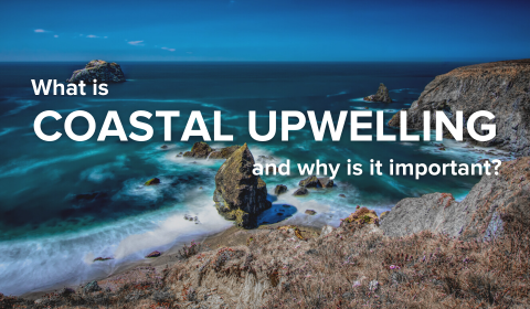 What is Coastal Upwelling and Why is it Important?