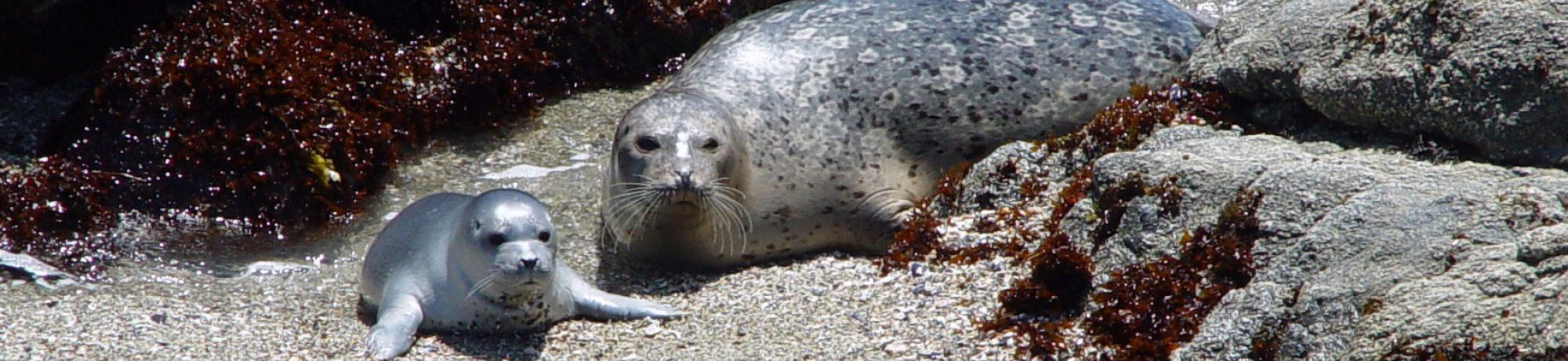 FAQ (harbor seals)